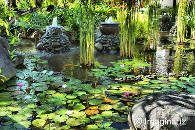 Water Lilies in a Koy Pond