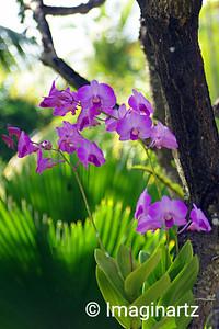 Orchids au Naturel