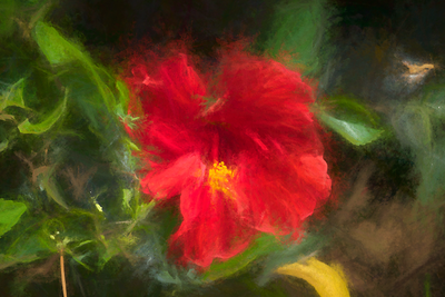 Chalked Hibiscus