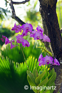 Orchids au Naturel