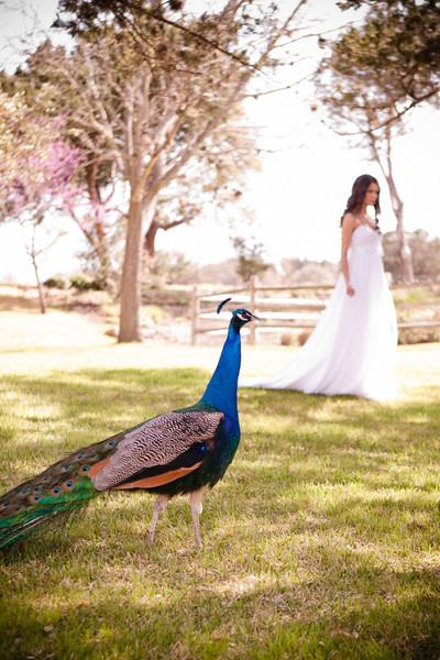 bridals-0022