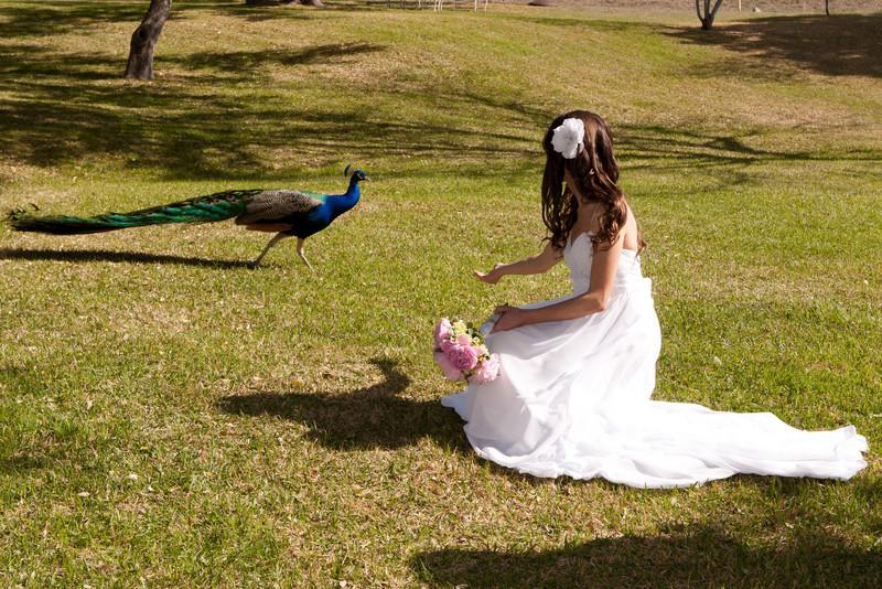 bridals-0023