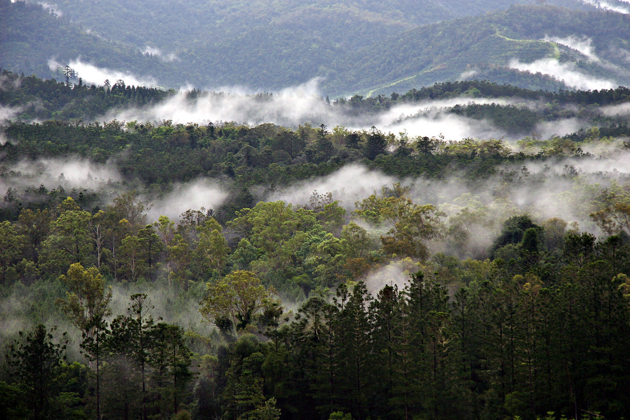 Warm Mists Caress the Imbil Forests