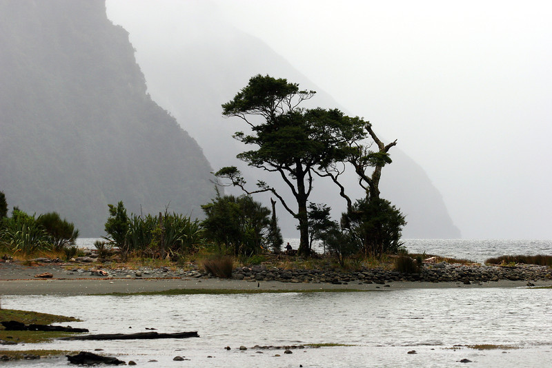 Alone in a Wild Place: Milford Sound, NZ