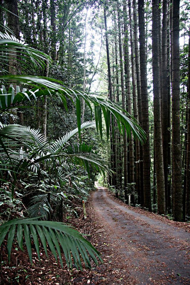 Inspirational Forest, Numinbah