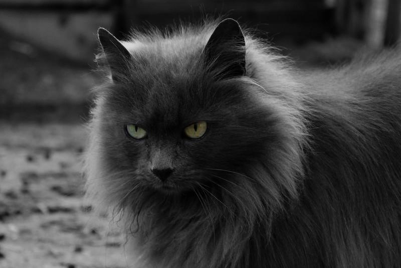 pam the super cute cat