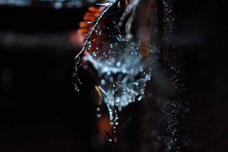 untitled 01| Water Bokeh