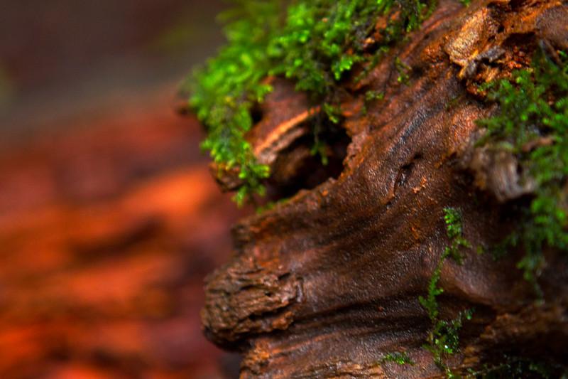 Moss Covered Stump