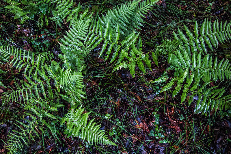 Full Frame Ferns