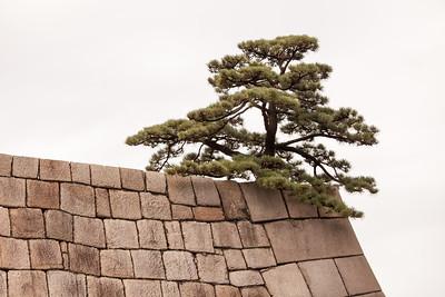 Tree on top of Tenshu-dai