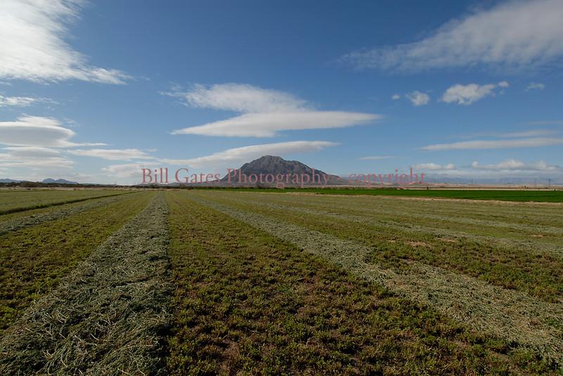 Mt Signal Hay Field