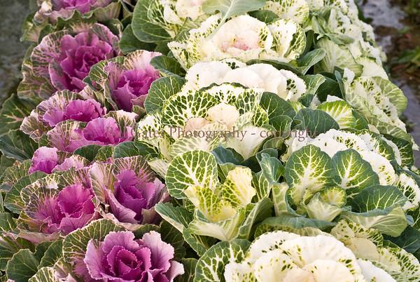 Flowers - Del Oro