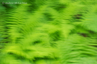 In-camera Fern Blur