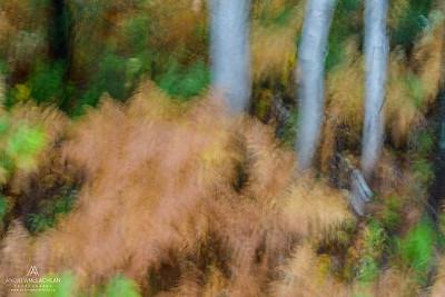 In-camera Forest Blur, Ontario, Canada