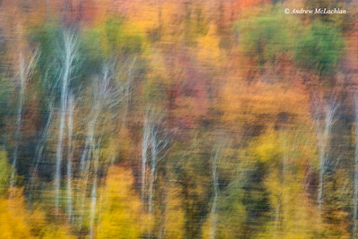 In-camera Blur of Autumn Woodlands