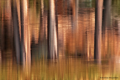 Spruce tree trunks reflecting in Raven Lake in Ontario's Halfway Lake Provincial park