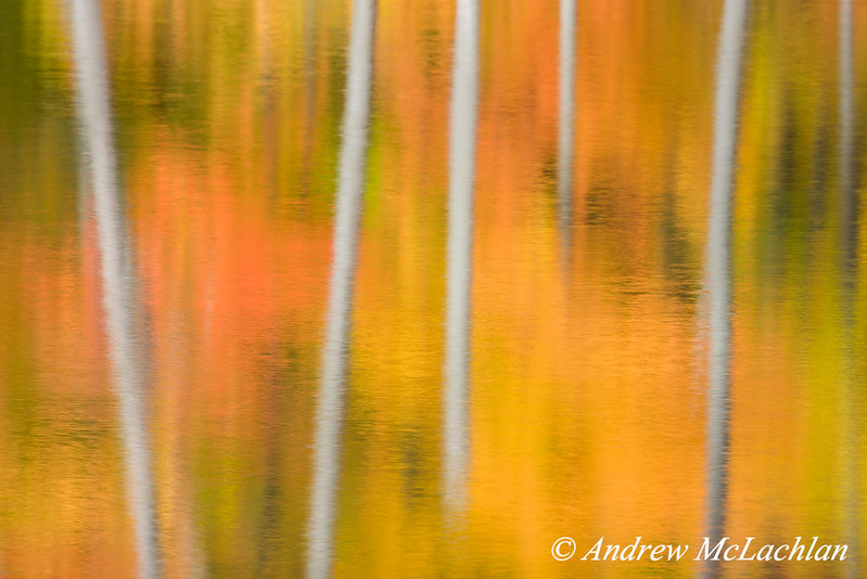 Impressionistic Blur of autumn trees reflecting in pond near Parry Sound, Ontario, Canada