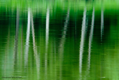 Birch Trees Reflecting in George Lake, Killarney Provincial Park, Ontario.