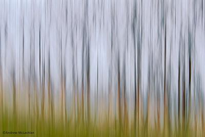 Staghorn Sumac Blur
