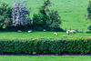 REPUBLIC OF IRELAND-KELLS-Brú na Bóinne