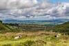 REPUBLIC OF IRELAND-CARROWKEEL