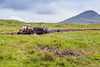 REPUBLIC OF IRELAND-COUNTY MAYO-PEAT HARVEST