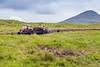 REPUBLIC OF IRELAND-COUNTY MAYO-PEAT HARVEST