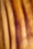 <font size=+2>Bristlecone Impression</font>  Bishop, California <font size=-1>(5II-02719)</font>