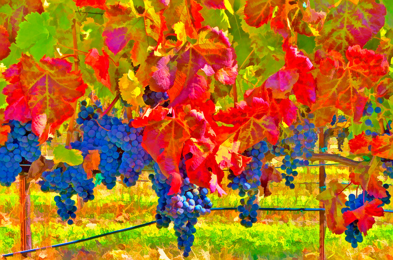 ART - Vineyard Impressions - Autumn #34 - 2011