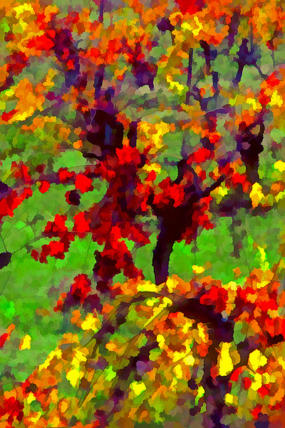 ART - Vineyard Impressions - Autumn #9