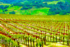 ART - Vineyard Impressions - Spring #3