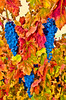 ART - Vineyard Impressions - Autumn #101 - 2012