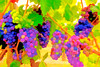 ART - Vineyard Impressions - Summer #4