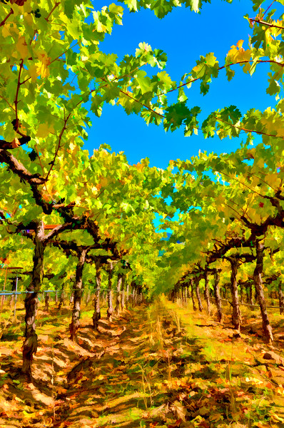 ART - Vineyard Impressions - Autumn #38 - 2011