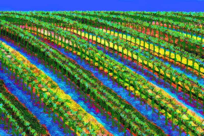 ART - Vineyard Impressions - Spring #8