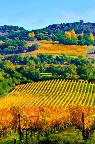 ART - Vineyard Impressions - Autumn #50 - 2011