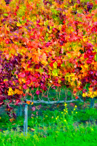ART - Vineyard Impressions - Autumn #62 - 2011