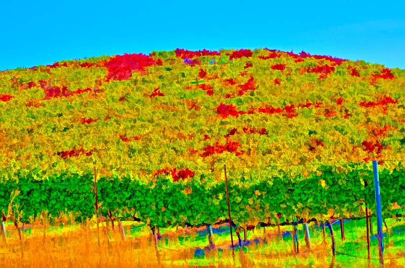 ART - Vineyard Impressions - Autumn #23 - 2011