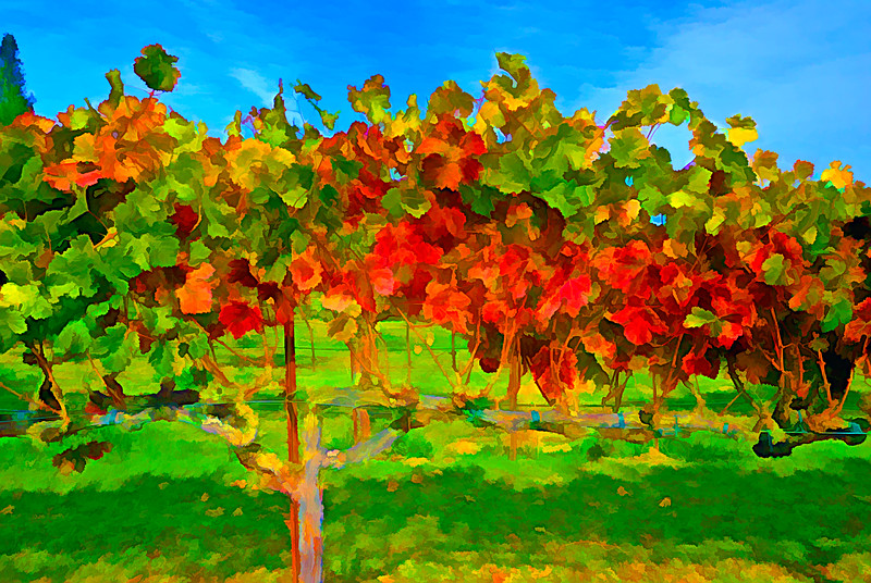 ART - Vineyard Impressions - Autumn #1