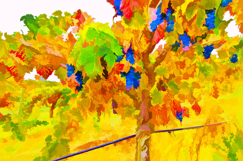 ART - Vineyard Impressions - Autumn #71 - 2012