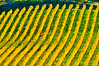 ART - Vineyard Impressions - Autumn #52 - 2011