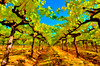 ART - Vineyard Impressions - Autumn #39 - 2011