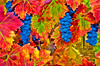 ART - Vineyard Impressions - Autumn #110 - 2012