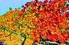 ART - Vineyard Impressions - Autumn #35 - 2011