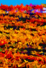 ART - Vineyard Impressions - Autumn #17