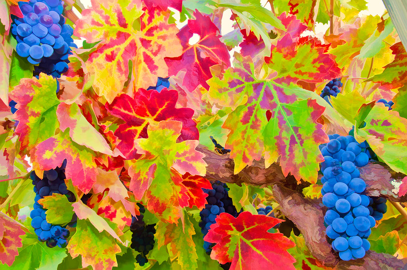 ART - Vineyard Impressions - Autumn #106 - 2012