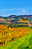 ART - Vineyard Impressions - Autumn #51 - 2011