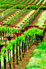 ART - Vineyard Impressions - Spring #2