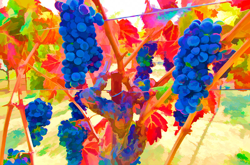 ART - Vineyard Impressions - Autumn #122 - 2012