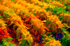 ART - Vineyard Impressions - Autumn #5